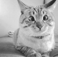 chat ché rigolo