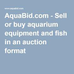 Sell or buy aquarium equipment and fish in an auction format Planted Aquarium, Aquarium Fish, Plecostomus, Aquarium Supplies, Marine Fish, Angel Fish, Freshwater Fish, Catfish, Betta