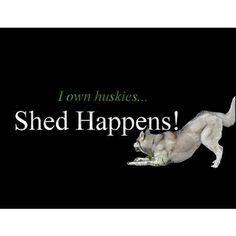 husky    Like, repin, share! :)