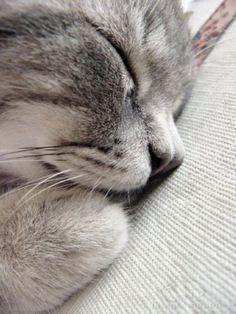 Dormir!