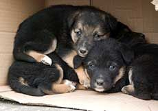 Normal Birth in Dogs | petocracy