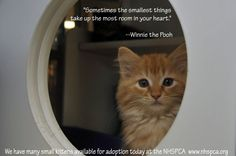 We have many kittens available for adoption at the New Hampshire SPCA please click here for more info http://www.nhspca.org/how-to-adopt-s/44.htm