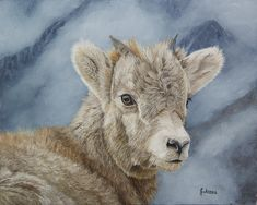 """A little Bighorn Lamb is heading for the high rocky cliffs. Titled: """"Little Bighorn"""" and is available for purchase on fine art paper and canvas prints by Johanna Lerwick Wildlife / Nature Artist. Fine Art Prints, Canvas Prints, Sheep And Lamb, Nature Artists, Wildlife Nature, Nature Paintings, Local Artists, Art Oil, Fine Art America"""