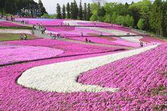 羊山公園 Hitsujiyama Park