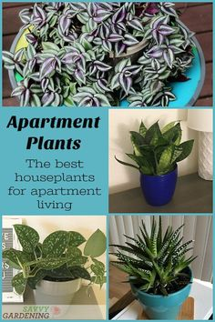 Apartment plants: 14 of the best houseplants for apartment living. Looking for houseplants that are the perfect fit for an apartment? Meet 15 beautiful, low-care apartment plants for tabletops, shelves, and bookcases. Hanging Plants, Potted Plants, Indoor Plants, Indoor Outdoor, Plant Pots, Bathroom Plants, Bathroom Colors, Gardening For Beginners, Gardening Tips