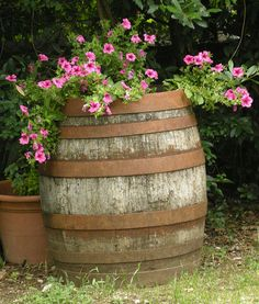 Barrel of Petunias