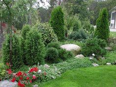 Havupuut istutus  Vinkkejä puutarhaan