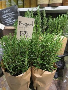 idea to sell at farmers market herbs - Google Search