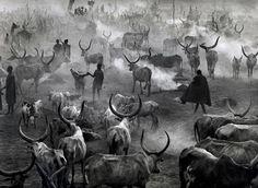 Sebastião Salgado Dinka cattle camp of Amak, Southern Sudan, from the series Genesis, 2006. Gelatin silver prints.