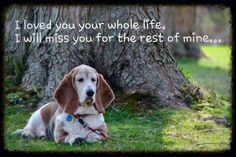 To my past dog, Princess and my cats, Duke, Mandy, Sandy and Tim. Large Dog Breeds, Best Dog Breeds, I Love Dogs, Puppy Love, D Is For Dog, Oriental Cat, Bassett Hound, Drag, Bloodhound Dogs