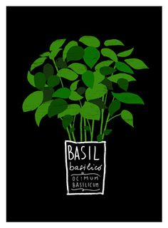 basil kitchen art print by Anek on etsy - typography and imagery working well with selective colour emphasising the plant