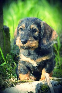 Such a cutie! #Cute #Puppy Click to see how you can keep your puppy active indoors!