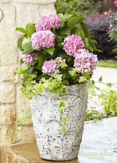 Forever & Ever Peppermint Hydrangea with Variegated English Ivy