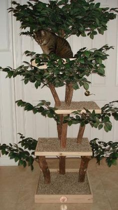 KITTY Tree Deluxe with Topper Assembly Cat Tree by PetTreeHouses, $499.00 by oldrose