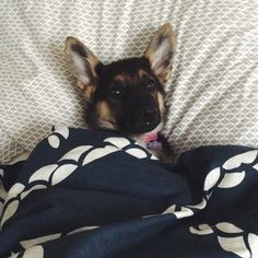 Is it morning yet?