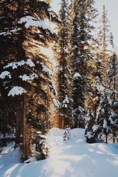 Winter – Miracles from Nature Winter Szenen, Winter Cabin, Winter Love, Winter Christmas, Photography Winter, Nature Photography, Winter Drawings, Winter Wallpaper, Holiday Wallpaper
