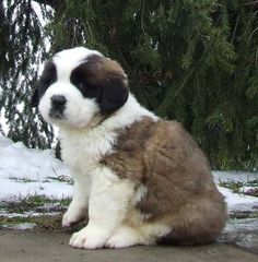 I love Corgies and St. Bernards. That will work out well!