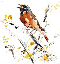 """Lucy Newton; Watercolor Painting """"Redstart""""."""