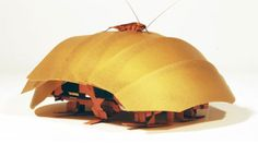 This robot cockroach could eventually help search-and-rescue teams