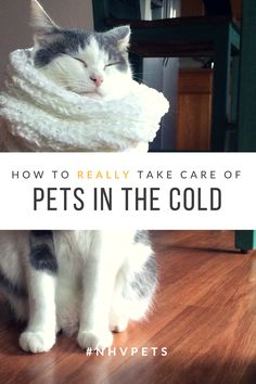 How to take care of your cat in the cold weather?