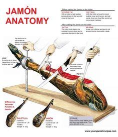 Jamón anatomy