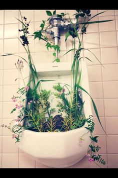 A great way to enhance the mood of your bathroom experience.    Just flush to water and tend to the plants a few times throughout the day.   Urinal style ideas toilet decoration plans floral arrangement water fall fountain