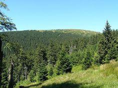 Králický Sněžník Flora, Mountains, Nature, Travel, Voyage, Viajes, Traveling, The Great Outdoors, Trips