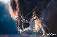 detail, foto, fotografie, paardenfotografie, juliette fotografie, tinker, paard, horse www.juliettefotografie.nl Horse Photography, Natural Materials, Horses, Detail, Nature, Animals, Popular, Animales, Animaux