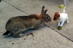Jack Rabbit and Jack Russell
