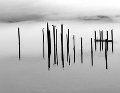 Cormorants sitting on the remnants of a dock on a foggy morning