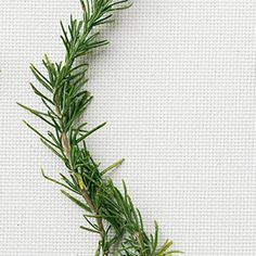 Rosemary: The aromatic leaves season meats, sauces, and soups.