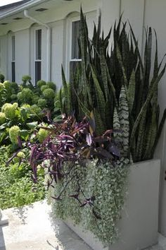 I so love this combination-Plants: Mothers-in-law tongue,   Dichordra 'Silver Falls'Setcreasea 'Purple Heart' (great website-thinkoutsidethebox.blogspot.com)