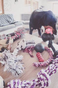 Hunde brauchen Spielzeug – es ist wichtig für ihre Entwicklung! Ich liebe es dem Hund dabei zuzuschauen, wie er sich selber mit seinem Tau beschäftig. Ich spiele gerne mit ihm Zerrspiele oder Ball, Frisbee und Co. In der Zeit des Zahnwechsels, hat er einen geflochtenen Stoffring gehabt, das er kräftig zerknautscht hat. Aber er hatte kurze Zeit auch ein Kunststoffkauring. …
