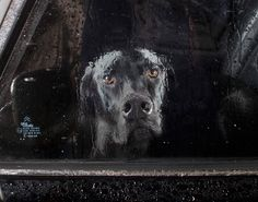 """From a series called """"Photos of dogs starting out car windows"""""""