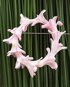 Hyacinth Wreath Boutonniere