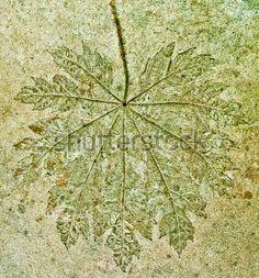 impresion de hojas en piso de cemento - Buscar con Google Dandelion, Google, Flowers, Plants, Home, Leaf Prints, Cement Floors, Impressionism, Dandelions