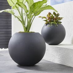 Create the perfect summer escape with gardening tools and accessories from Crate and Barrel. Find outdoor planters, pots, watering cans, stakes and more. Large Indoor Planters, White Planters, Outdoor Planters, Indoor Plants, Modern Planters, Large Garden Pots, Large Backyard Landscaping, Landscaping With Rocks, Landscaping Ideas
