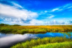Fascination - Everglades National Park, FL. | Ivan Peña