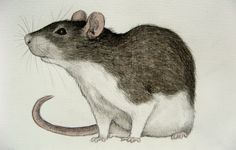 Victorian Pet Rat painting | pet rat by moussee