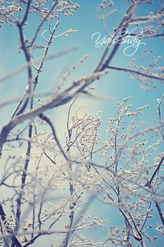 Frost - copyright YahShay Photography #winter