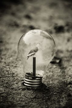 surreal images of objects in a jar - Google Search