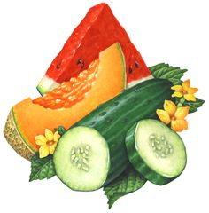 Schneider Stock Illustrations Vegetables Miscellaneous Illustrations Available for Stock Use Vegetable Illustration, Fruit Illustration, Food Illustrations, Healthy Fruits And Vegetables, Kinds Of Vegetables, Watercolor Food, Object Drawing, Food Drawing, Veggies