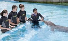Marineland rencontre avec les dauphins rencontre femme asiatique montreal sur roanne site rencontre