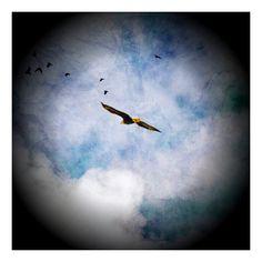 Vancouver Island Eagle