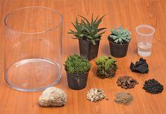 Passo a passo para criar um terrário - Plantas - Plantas, Flores e Jardins