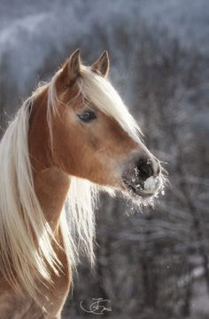 ~See the beautiful things in life. Only by stopping long enough to observe our surrowndings, do we bring shape and meaning to our lives~~All the. Most Beautiful Horses, All The Pretty Horses, Animals Beautiful, Beautiful Images, Horse Photos, Horse Pictures, Pictures To Draw, Horse Girl, Horse Love