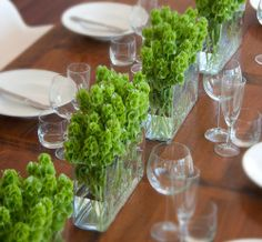 Hello Blossoms ::Table Ideas:: Molucca Balm a.k.a Shells of Ireland, is a truly unique variety with vibrant green 'shells' encasing tiny pink flowers. For a wedding table, a long rectangular glass vase will create a sea of fresh, textured green blooms and a beautiful, criss-crossed pattern of green stems.