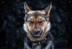 I love this dog's look! Photo Credit: Come on, I do not bite by Sergey Polyushko on 500px. From https://500px.com/photo/90842265/come-on-i-do-not-bite-by-sergey-polyushko