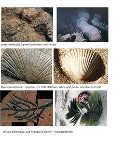 Le scoperte di Michael Wachtler fossili delle Dolomiti