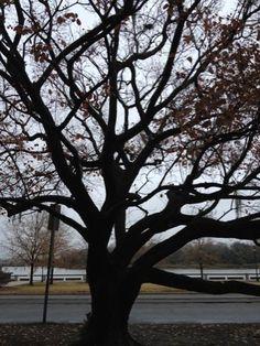 Tree in historic Savannah Photo taken by Jordan